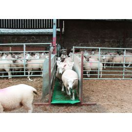 Foam Footbath For Sheep