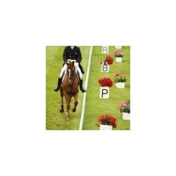 Set of 12 CCI Dressage Marker Boxes